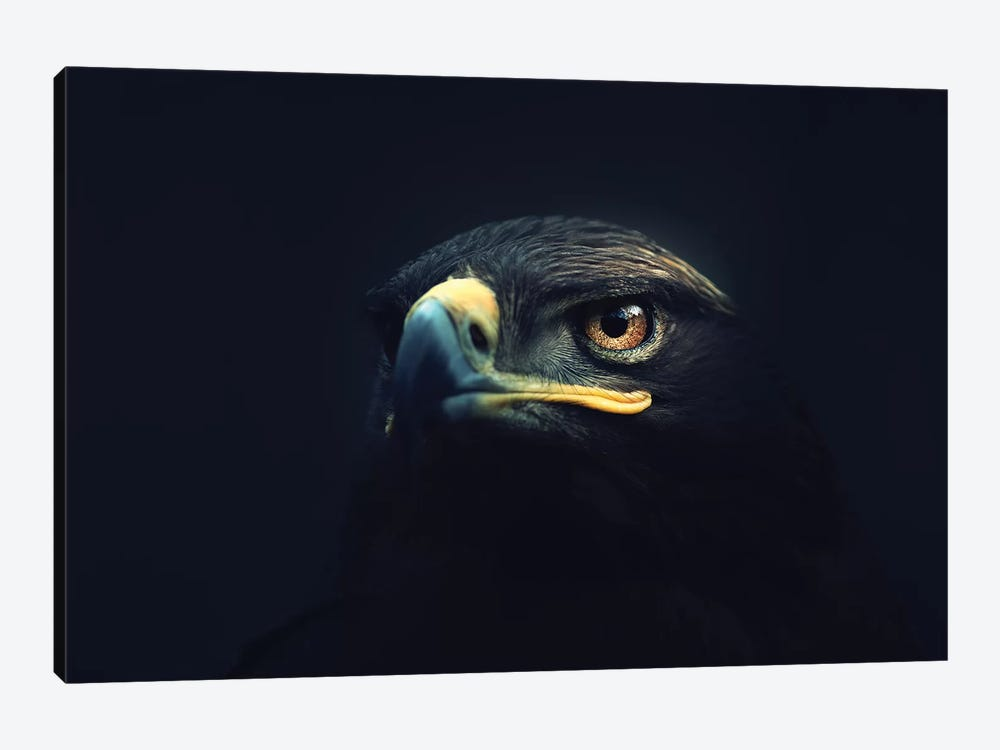 Hawk Eyes by Zoltan Toth 1-piece Art Print