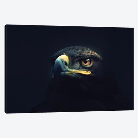 Hawk Eyes Canvas Print #ZOL62} by Zoltan Toth Canvas Artwork