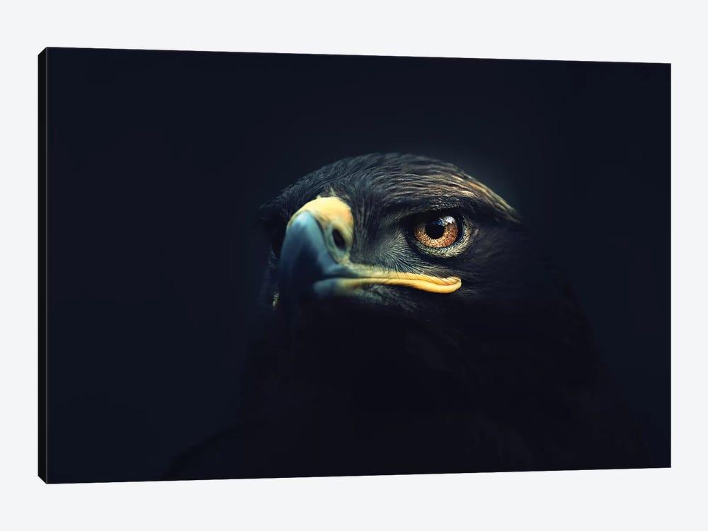 Hawk Eyes by Zoltan Toth 1-piece Art Print