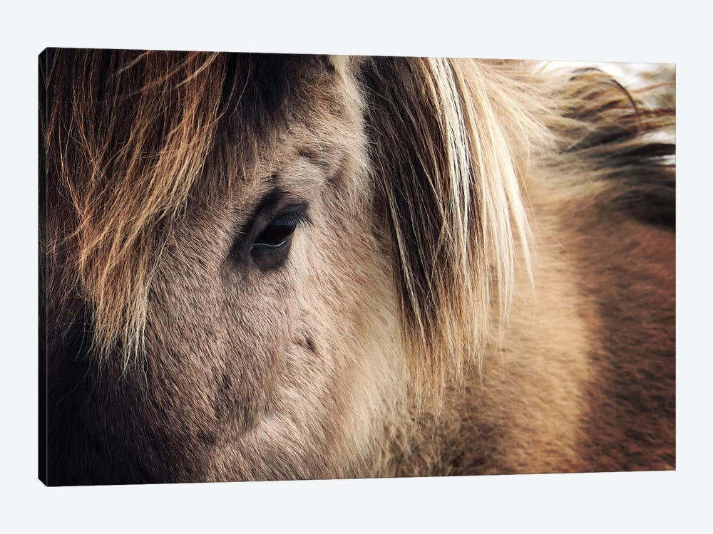 Horse Close-Up 1-piece Canvas Art