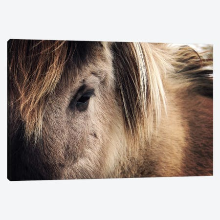 Horse Close-Up Canvas Print #ZOL63} by Zoltan Toth Canvas Artwork