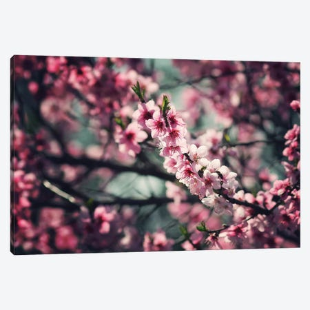 Pink Buds Canvas Print #ZOL67} by Zoltan Toth Canvas Art Print