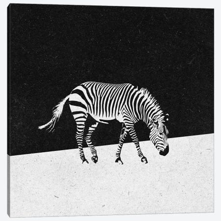 Zebra Canvas Print #ZOL80} by Zoltan Toth Canvas Art