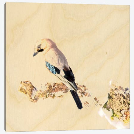 Beauty Is Simple Canvas Print #ZOO1} by 5by5collective Canvas Artwork