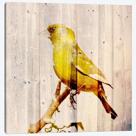 Golden Days Canvas Print #ZOO2} by 5by5collective Canvas Wall Art