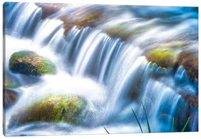 Fern Spring - Yosemite Valley Canvas Art Print