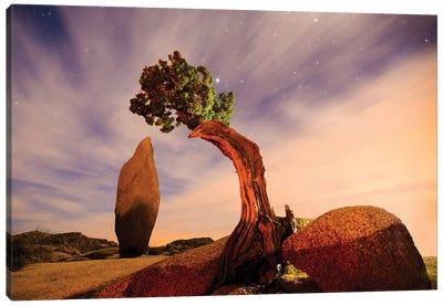 Juniper Tree At Jumbo Rocks - Joshua Tree National Park Canvas Art Print