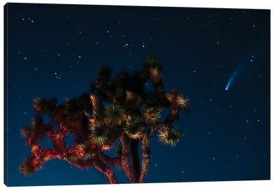 Spotting Newwise Comet Canvas Art Print
