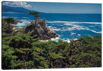 Lone Cypress, Pebble Beach, Ca Canvas Art Print