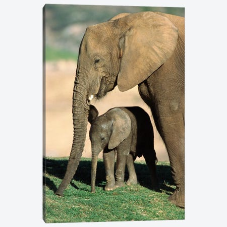 African Elephant Mother And Calf, Native To Africa Canvas Print #ZSD1} by James Ruby Canvas Art Print