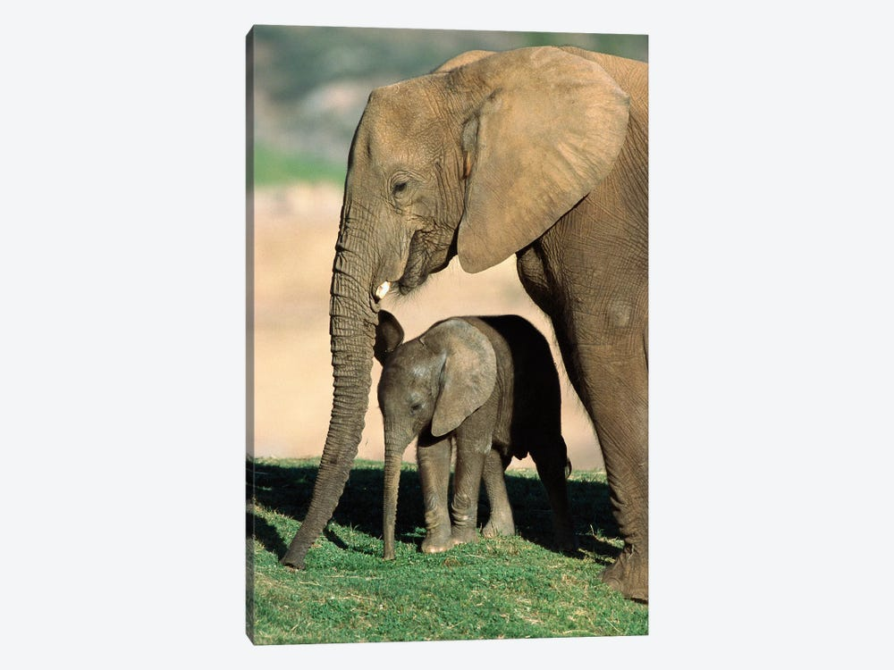 African Elephant Mother And Calf, Native To Africa by ZSSD 1-piece Canvas Wall Art