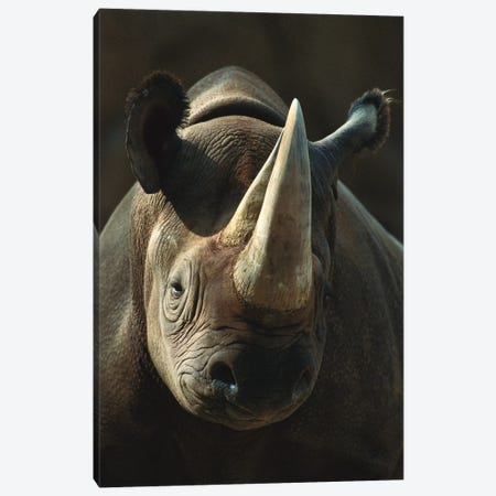 Black Rhinoceros Portrait, Native To Africa Canvas Print #ZSD6} by James Ruby Canvas Wall Art