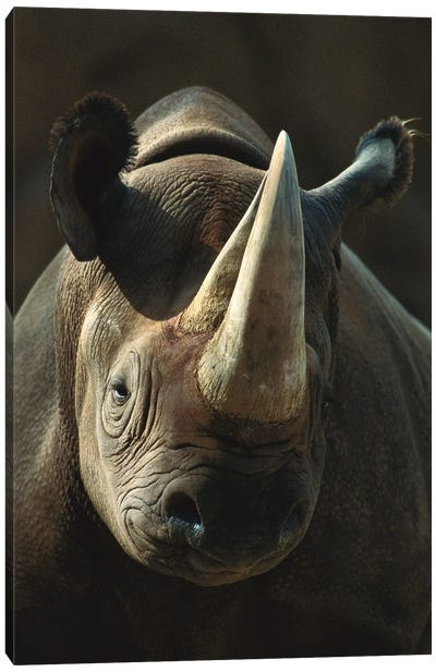 Black Rhinoceros Portrait, Native To Africa Canvas Art Print