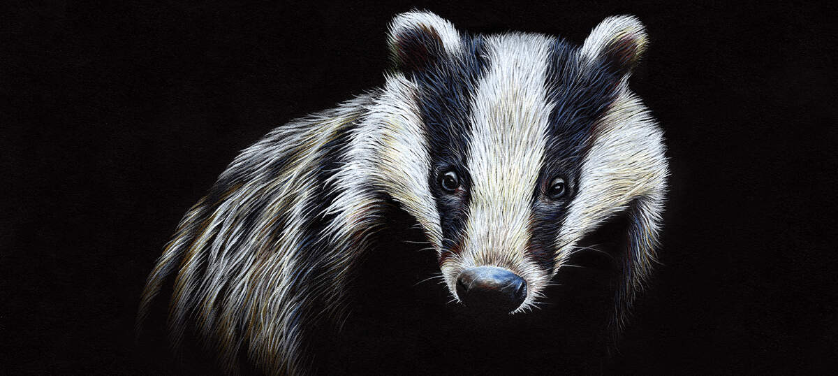 Badgers Canvas Art