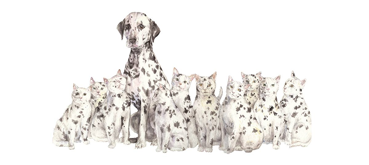 Dalmatians Canvas Prints