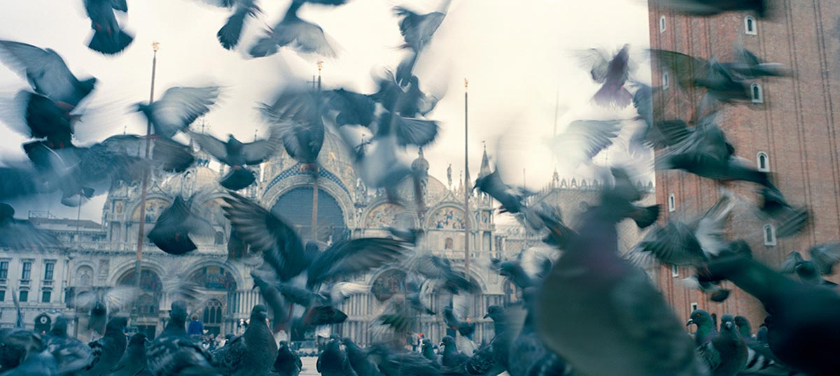 Doves & Pigeons Canvas Art