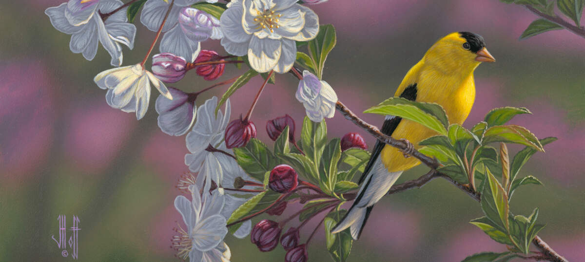 Finches Art Prints