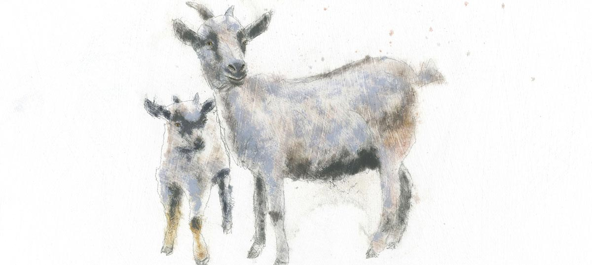 Goats Canvas Wall Art