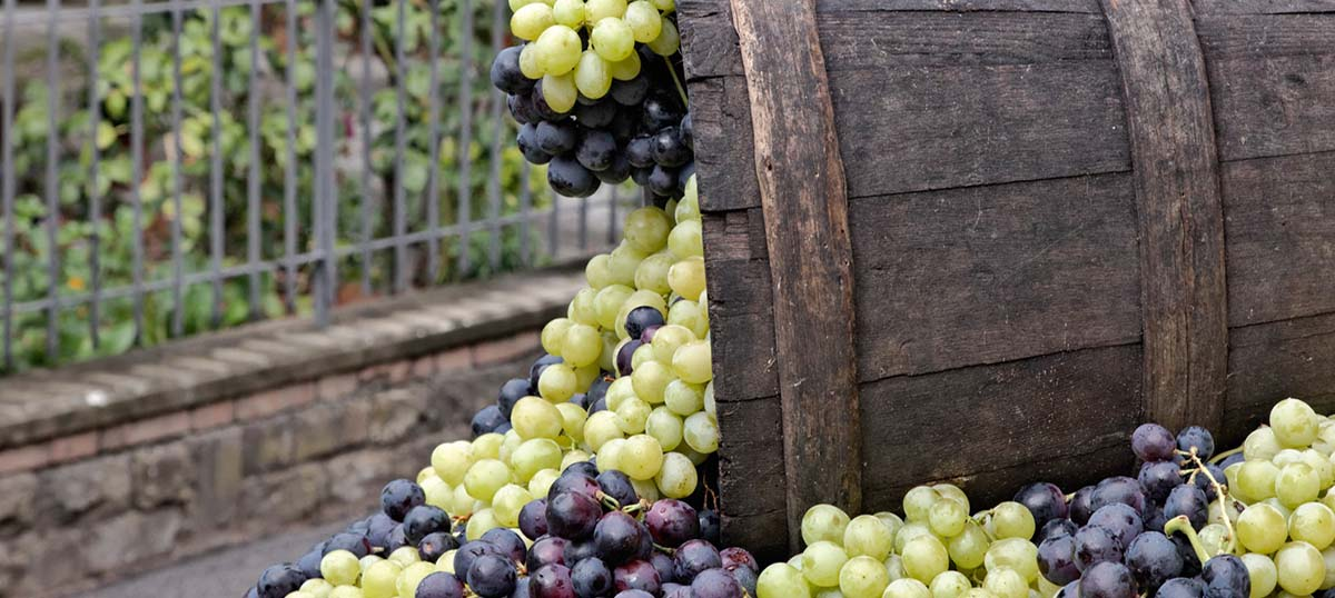 Grapes Canvas Prints