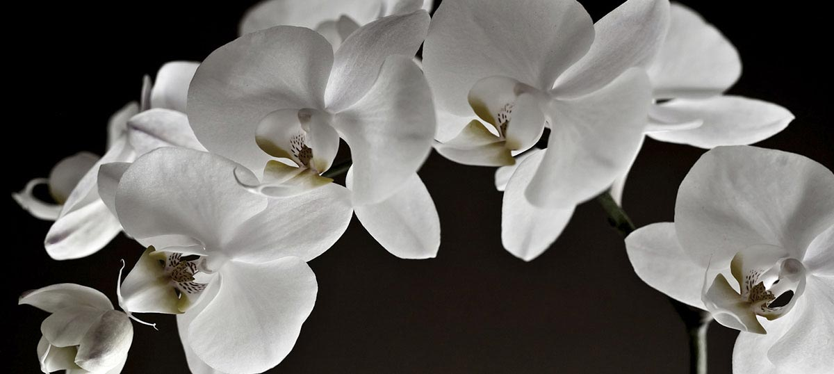 Orchids Canvas Wall Art