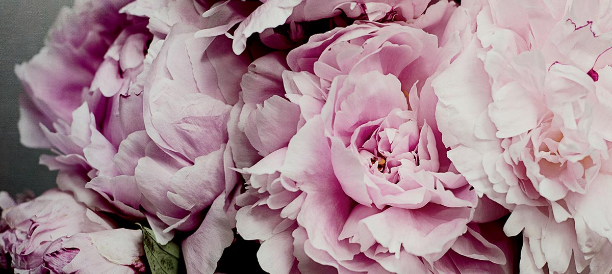 Peonies Canvas Wall Art