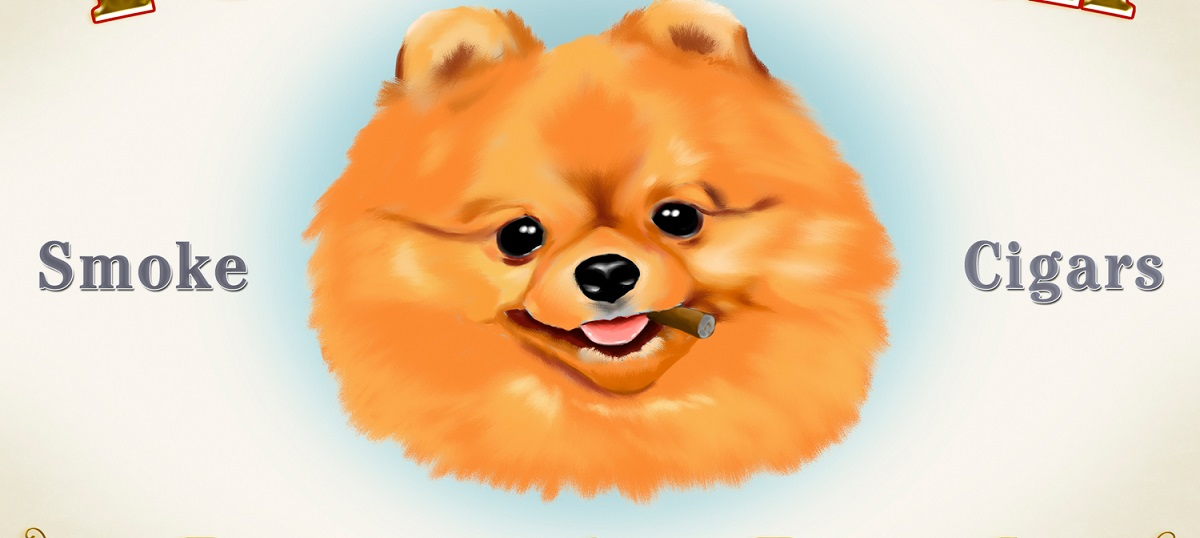 Pomeranians Art Prints