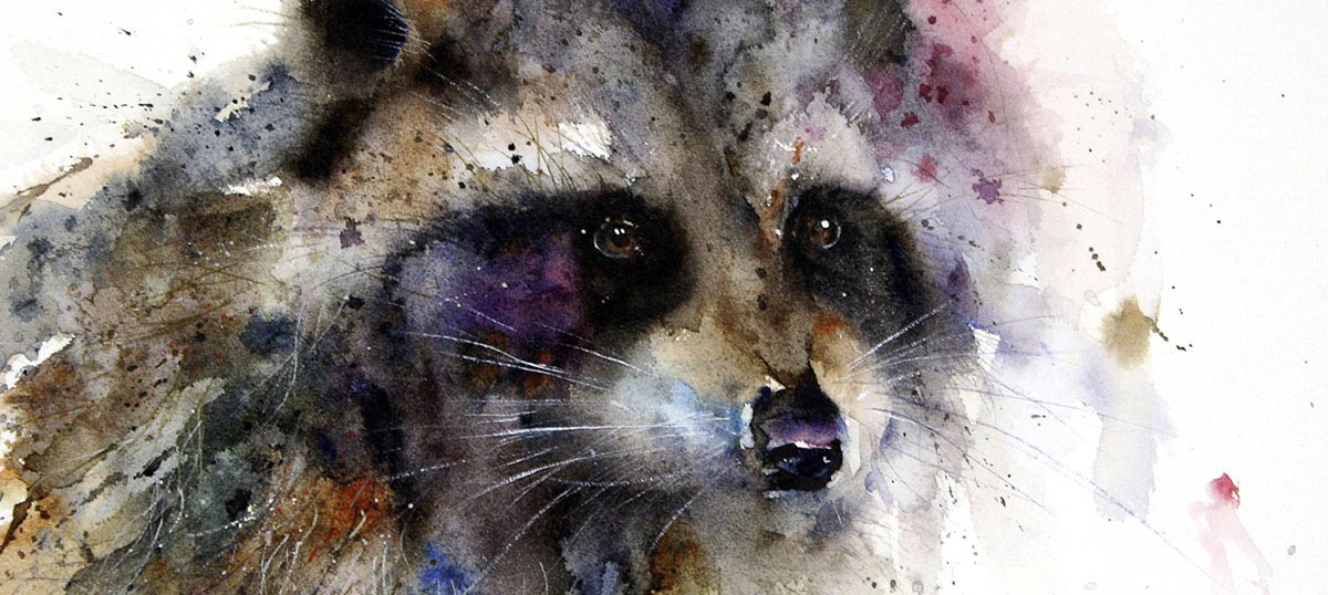 Raccoons Art Prints