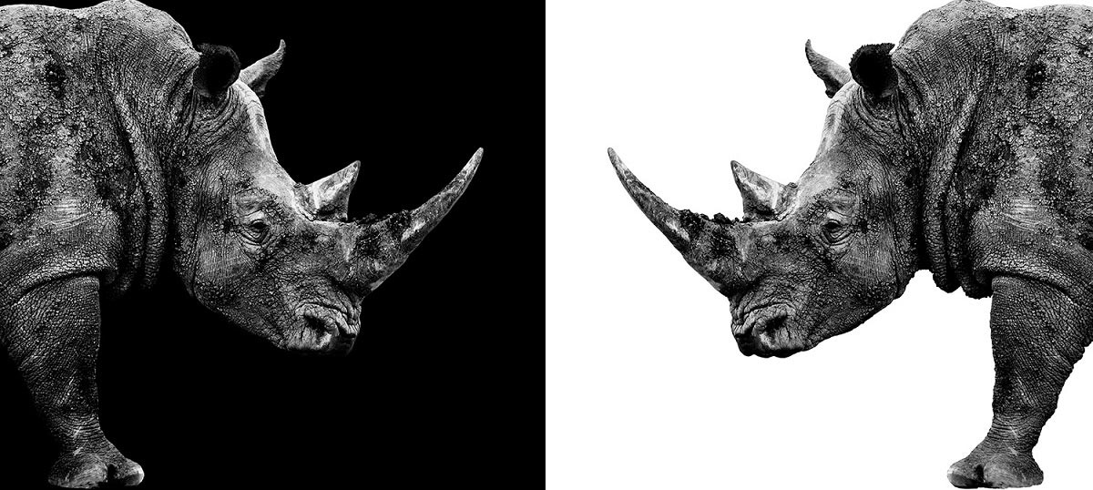 Rhinoceroses Canvas Artwork