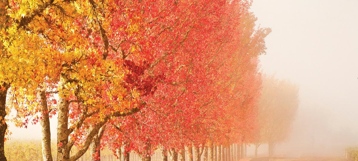 Scenic Fall Canvas Prints