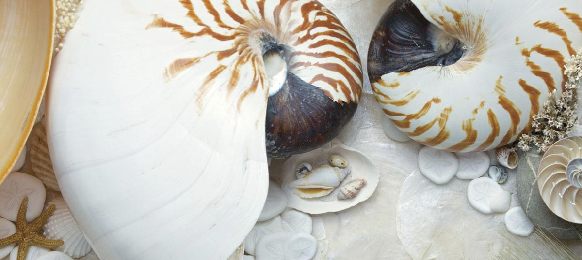 Shell Close-Ups Canvas Prints