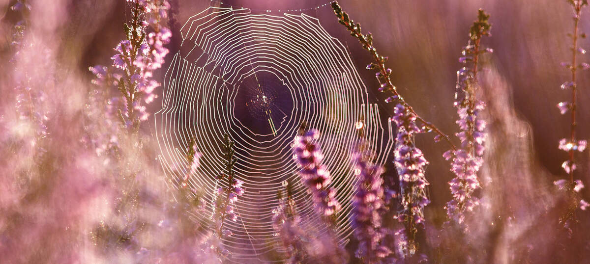 Spider Webs Canvas Prints