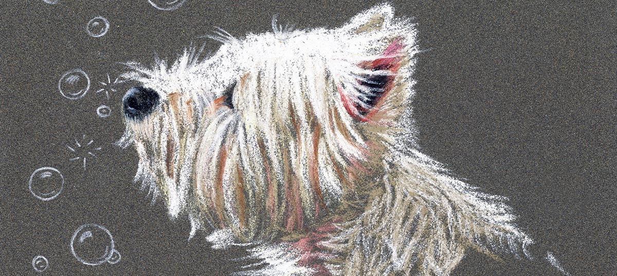 West Highland White Terriers Canvas Art Prints