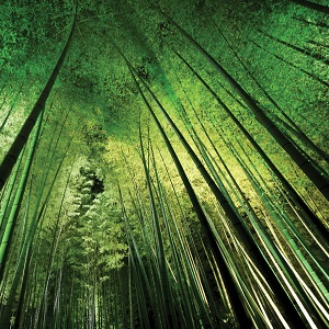 Bamboo Canvas Prints