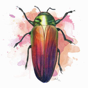 Beetles Canvas Wall Art