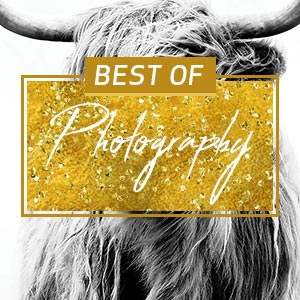 Top Photography of 2016 Art Prints