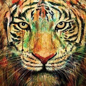 Wild Cats Canvas Art Prints