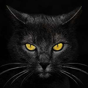 Black Cats Canvas Art
