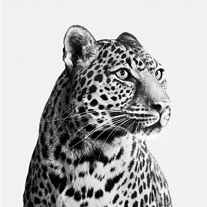 Black & White Animals Canvas Prints
