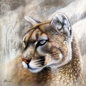 Cougars Canvas Artwork