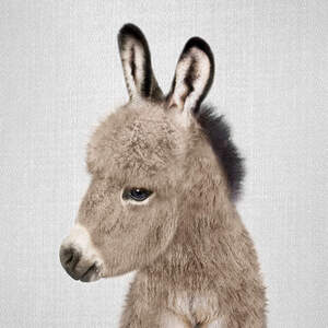 Donkeys Canvas Art