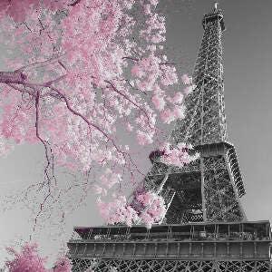 Paris Print Paris Print Paris Photography Paris Wall Art Paris Cherry Blossoms Paris Decor Springtime in Paris Paris Bedroom Decor