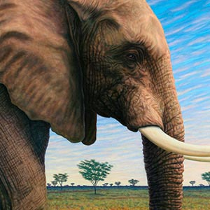 Elephants Canvas Art