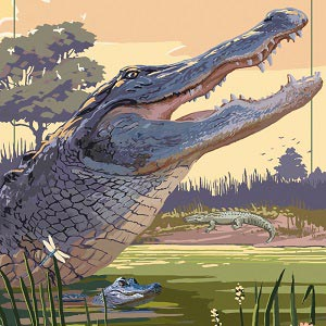 Everglades Art Prints