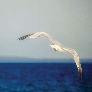 Gulls Art Prints