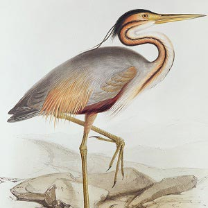 Herons Canvas Art