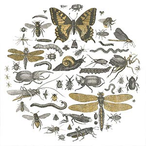 All Insects Canvas Wall Art