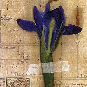 Irises Canvas Wall Art