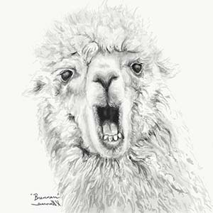 K Llamas Fine Art Canvas Wall Art