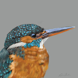 Kingfishers Art Prints