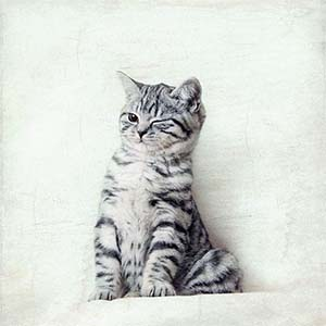 Kittens Canvas Art